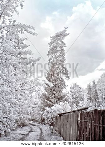 Infrared photography. Wooden fence on the garden plot