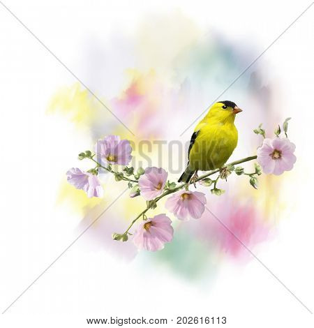 Digital Painting of  American Goldfinch (Carduelis tristis), on the flowers