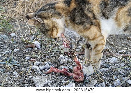 eating cats, cats eating the flesh,cute cats,
