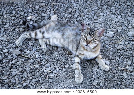 cute cats, big eyes cat pictures, great stray cats, cat eyes the most beautiful pictures,