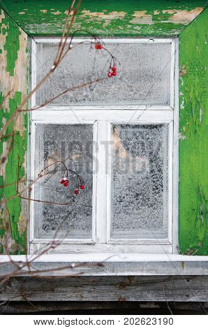 Rustic village ice covered window and branch of red viburnum