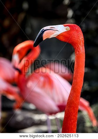 Pink Flamingo Portrait