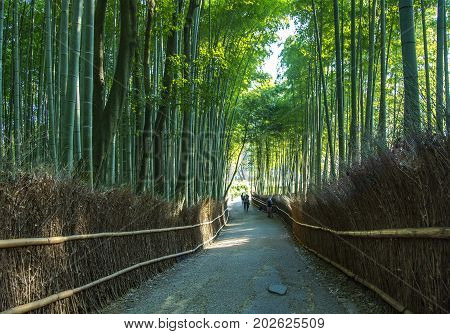 JAPAN, KYOTO, APRIL, 06, 2017 - Japanese bamboo forest in Arashiyama, Kyoto, JapannArashiyama  is a pleasant, touristy district in the western outskirts of Kyoto.