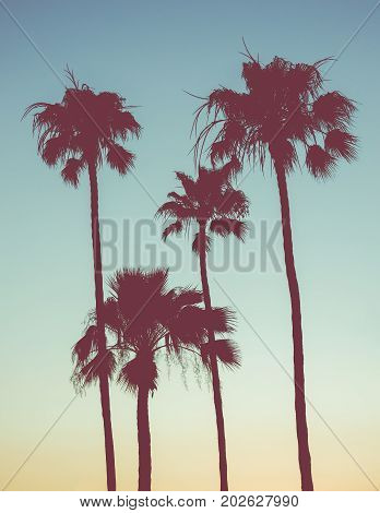 Retro Style Image Of Palm Trees At Sunset
