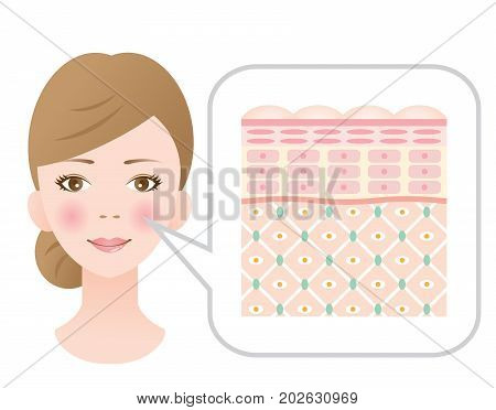 healthy skin woman. diagram of young healthy skin showing the collagen framework is healthy