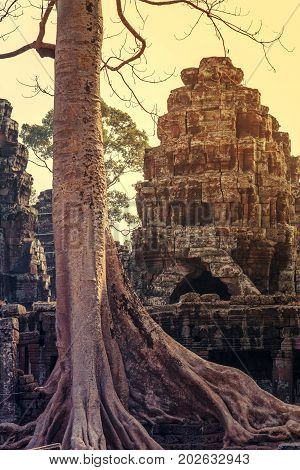 banyan tree roots in ruin Ta Prohm part of Khmer temple complex Asia. Siem Reap Cambodia. Ancient Khmer architecture in jungle.