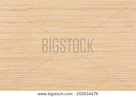 Natural texture of Oak veneer to use as background. Extremely high resolution photo.