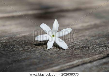 Azores Jasmine (Jasminum azoricum) flower on the wooden table