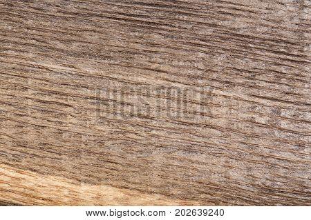 Old scratched wood bog oak . Texture. High resolution photo.