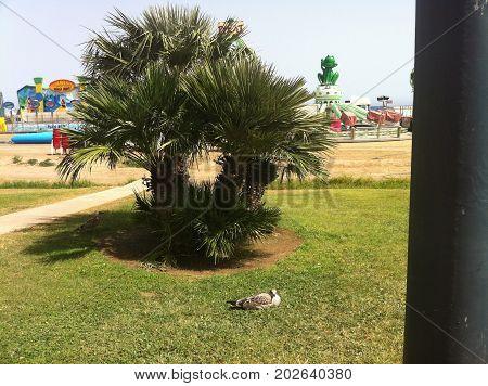 oiseau couché près du palmier au soleil