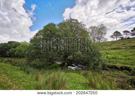 Old Tree growing on Dartmoor.. Dartmoor National Park is vast moorland in the county of Devon, England UK.