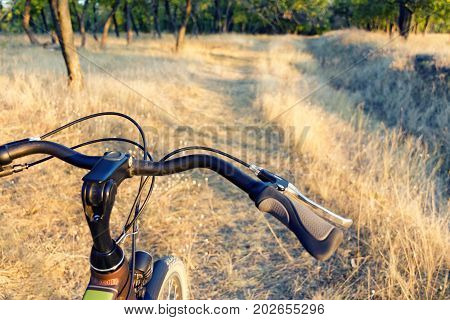 Part Of The Bicycle On The Off-road, Dry Autumn Grass And Forest