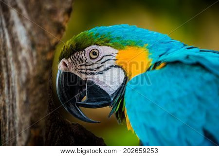 Close up Parrot, lovely bird animal and pet