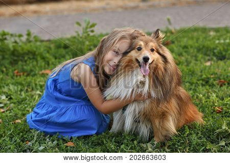 Cute little girl with a dog Sheltie breed. Best friends forever. Dog devotion. A girl and a pet in the park. She hugs the doggy