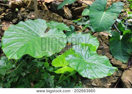 Leaf on the floor .nature background .