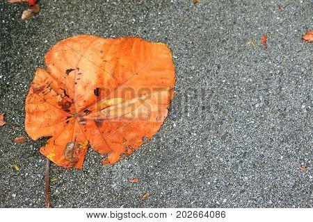Leaf on the floor . Nature background .