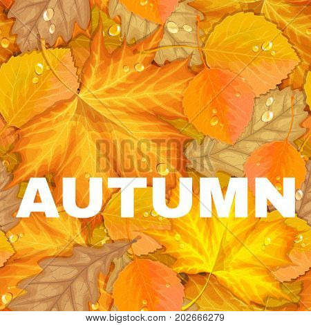 Autumn letter with yellow leaves. Fall sale vector background. Foliage lettering coupon design. Special offer illustration. Season discount poster. For t-shirt, fashion, prints, banner or packaging