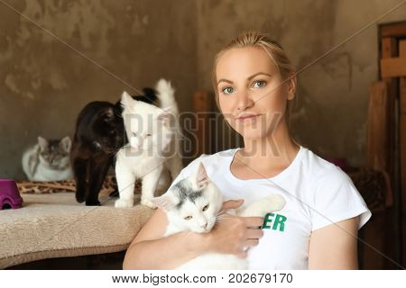Female volunteer with homeless cats in animal shelter