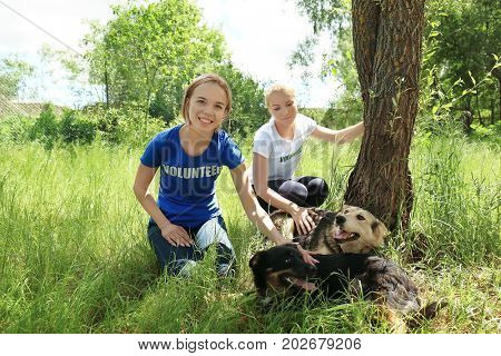 Female volunteers sitting on grass and petting homeless dogs from shelter