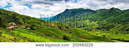 Panorama of rice terrace in Sapa Vietnam Rice fields