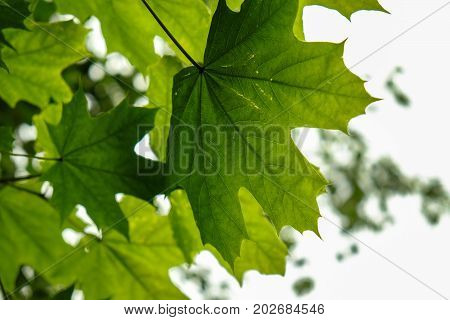 abstract photography green leaf is a great background