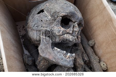 Archaeological excavation with skeletons and skull taken from the ground and placed in a storage box ready for preservation