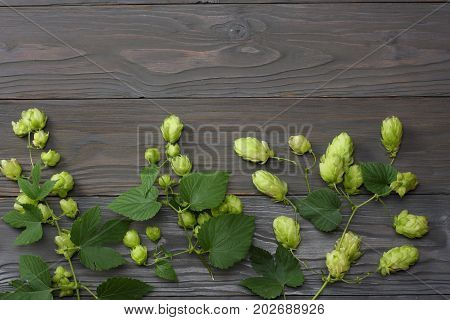 Beer Brewing Ingredients Hop On Dark Wooden Table. Beer Brewery Concept. Beer Background. Top View W