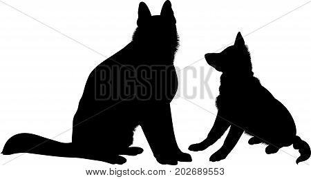 Shepherd Dogs. German Shepherd dog breed vector