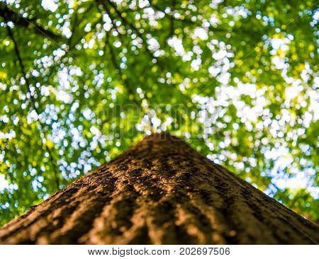 Photo of treetop of an old tree in a green beautiful forest