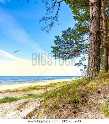 Autumnal coastal landscape in forestry dunes of the Baltic Sea.