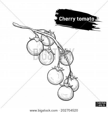 Cherry Tomato Sketch Outline
