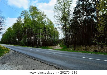 Asphalt road and roadside in the forest.
