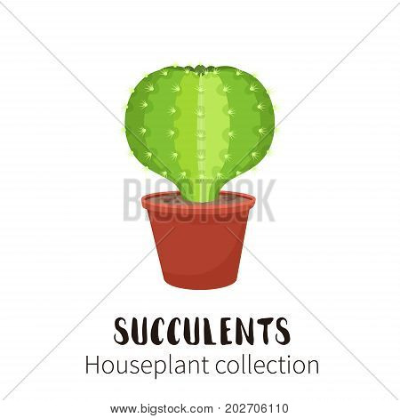 Cactus icons in cartoon flat style isolated on white background. Home plants cactus in pots and with flowers. A variety of decorative cactus with prickles and without.