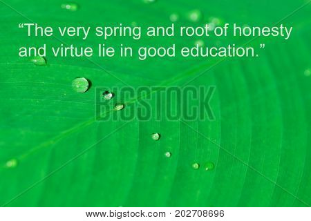 Inspirational quote by ancient Greek philosopher on floral background image