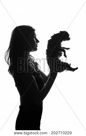 Silhouette of handsome woman standing with smal dog in her hands. She lifted pet over the head. Cut-out scene. Studio shot.