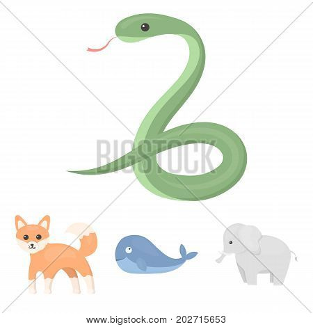 Whale, elephant, snake, fox.Animal set collection icons in cartoon style vector symbol stock illustration .