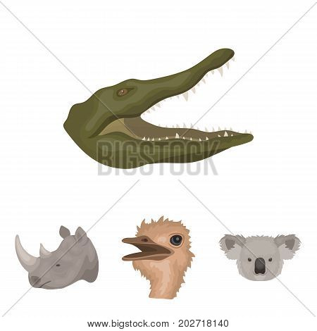 Ostrich, koala, rhinoceros, crocodile, realistic animals set collection icons in cartoon style vector symbol stock illustration .