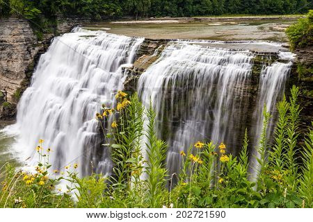 Looking at the wildflowers that grow along the side of the gorge near the middle falls on the Genesee river in Letchworth State Park in Castile New York. This photograph was taken in the summer time when everything is in bloom.