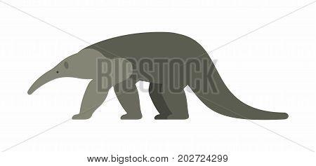 Giant anteater. Illustration on white background. Vector
