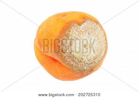 Molded Peach On White