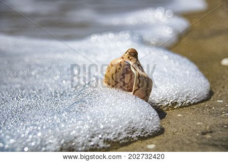 The Sea Shell Lies On The Seashore And Is Washed By The Water Of The Surf