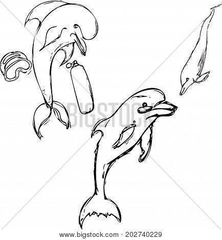 Dolphin set hand drawn. Dolphin cketch drawn
