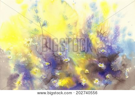 camomile in the yellow and blue background watercolor