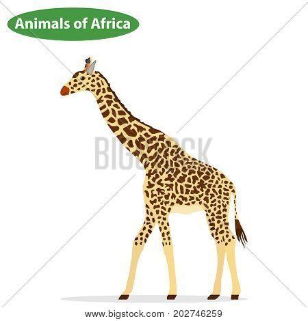 Giraffe the giraffe icon. Flat design vector illustration vector.