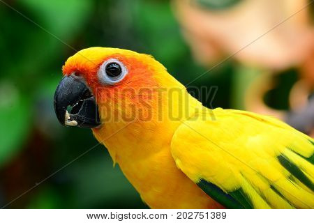 Sun Conure posing for its portrait in the gardens.I'm a very pretty bird.