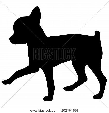 Silhouette of a dog.Vector illustration of chihuahua