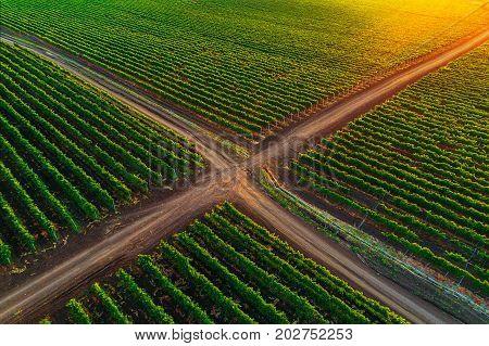 A Beautiful Sunrise Over Vineyard In Europe