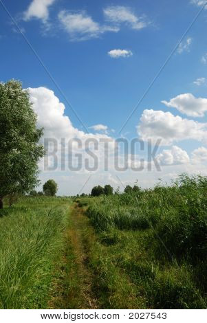 The Green Meadow Footpath