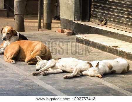 Fatigue and drowsiness of dogs,Sleeping on the floor