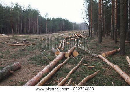 Environment, Nature And Deforestation Forest - Felling Of Trees In Wood